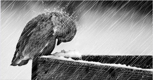 Một ngày nào đó, bạn sẽ không còn oán hận mà ngược lại còn cảm ơn những gian khổ ở đời - Ảnh 3