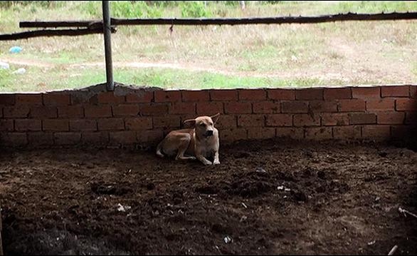 Chú chó giúp phát hiện thi thể bé trai 2 tuổi mất tích ở Bình Thuận - Ảnh 2