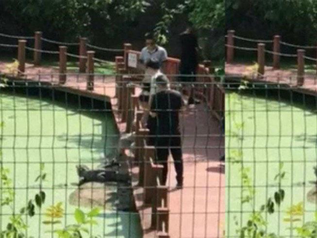 Du khách say xỉn dùng chân giẫm cá sấu trong khu bảo tồn gây phẫn nộ - Ảnh 2
