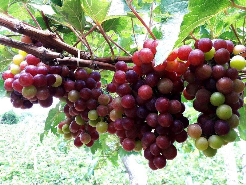 Ngăn ngừa da lão hóa sớm với các trái cây, rau củ này - Ảnh 3
