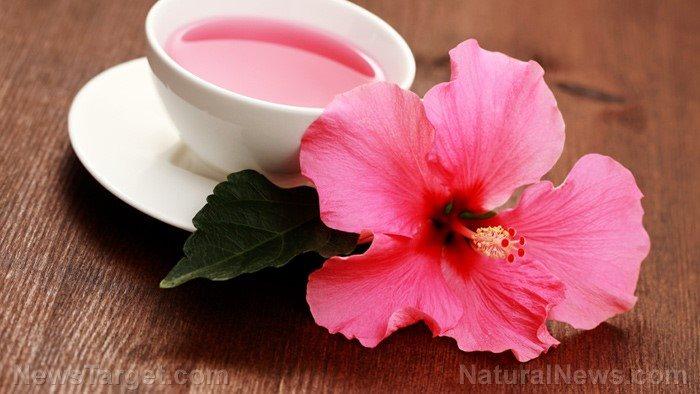 Trà hoa dâm bụt giúp giảm nguy cơ mắc bệnh tim mạch - Ảnh 1