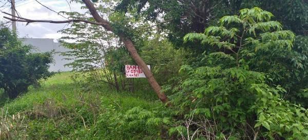 Cà Mau: Đất nhà đang ở bỗng dưng bị rao bán - Ảnh 3