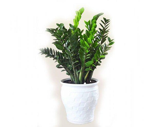 Mệnh Hỏa nên trồng 6 loại cây này để vượng vận, phát tài - Ảnh 4
