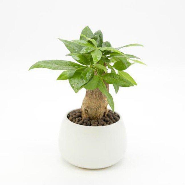 Mệnh Hỏa nên trồng 6 loại cây này để vượng vận, phát tài - Ảnh 6