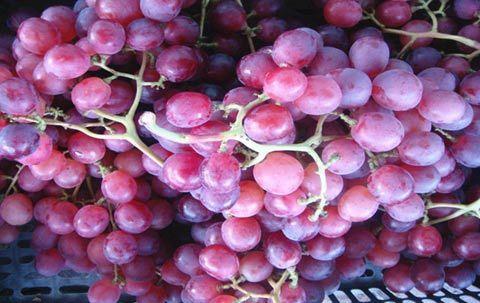 Mẹo chọn hoa quả tươi, an toàn cho gia đình - Ảnh 3
