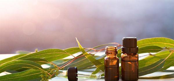 Những cách dùng tinh dầu tràm cho trẻ sơ sinh để bảo vệ tối đa làn da nhạy cảm  - Ảnh 3