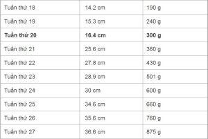 Bảng cân nặng đạt chuẩn của thai nhi theo từng tuần của WHO, để con thông minh khỏe mạnh - Ảnh 3