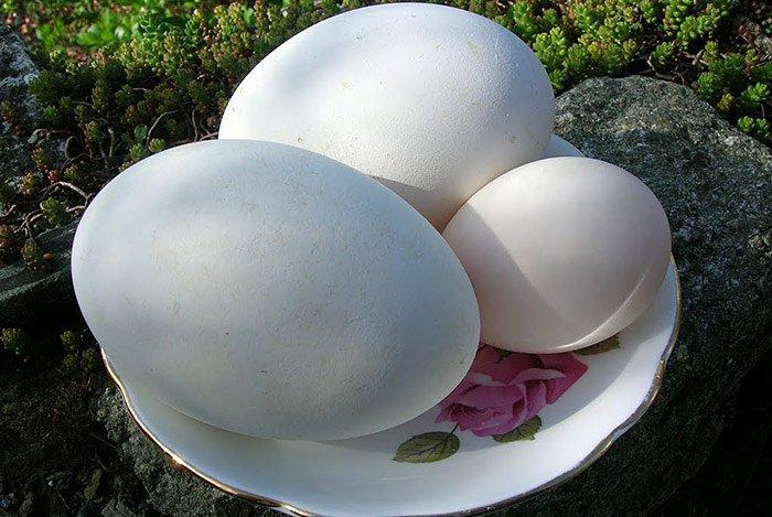 Trứng ngỗng có nhiều dưỡng chất tốt cho mẹ và thai nhi