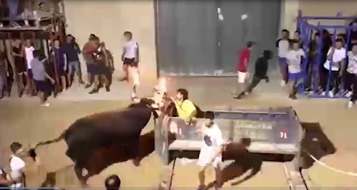Kinh hoàng clip cô gái đang đứng chụp ảnh bị bò tót hất tung - Ảnh 1