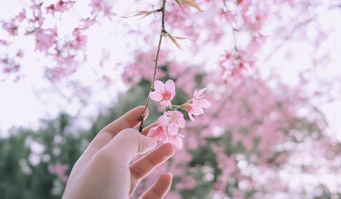 Phong thuỷ bất ngờ từ những loài hoa quen thuộc cắm trong nhà - Ảnh 3