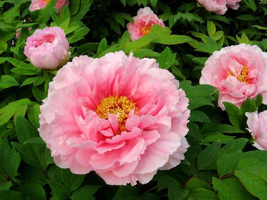 Phong thuỷ bất ngờ từ những loài hoa quen thuộc cắm trong nhà - Ảnh 1