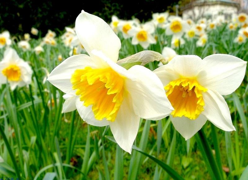 Phong thuỷ bất ngờ từ những loài hoa quen thuộc cắm trong nhà - Ảnh 5