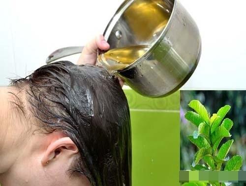 Luộc ngay nắm lá ổi làm nước gội đầu, mái tóc dễ rụng, chẻ ngọn hay xơ rối cỡ nào cũng trở nên dày dặn, óng mượt ngay tức khắc - Ảnh 4