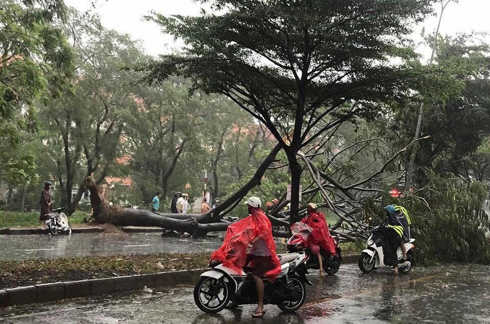 Sài Gòn ngập kinh hoàng, cây ngã đè người đi xe máy tử vong trong tâm bão - Ảnh 1