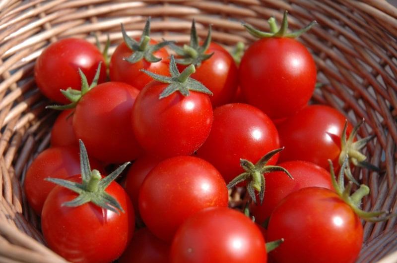 Cà chua không những tốt cho cơ thể mà còn giúp dưỡng trắng da
