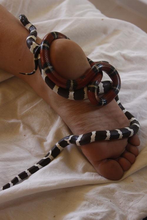 Sởn gai ốc với phương pháp mát xa bằng... rắn