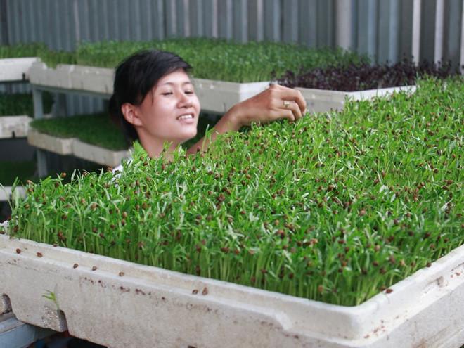 Cách trồng rau mầm nhanh mọc tại nhà cho bạn có vườn sau sạch ăn vào dịp Tết - Ảnh 5