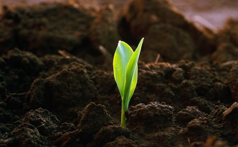 Tử vi ngày 12/5/2021: Thiên Bình có cơ hội đổi đời bước vào cuộc sống giàu sang, Song Ngư tiến xa trên con đường sự nghiệp - Ảnh 1