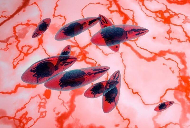 Phát hiện ký sinh trùng có thể gây bệnh ung thư não nguy hiểm bên trong thịt nấu chưa chín, nước ô nhiễm - Ảnh 1