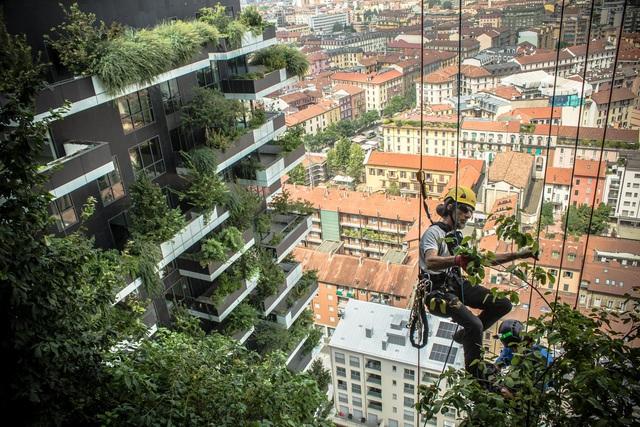 Độc đáo tòa chung cư như rừng giữa phố, mỗi buổi sáng chim hót líu lo - Ảnh 1