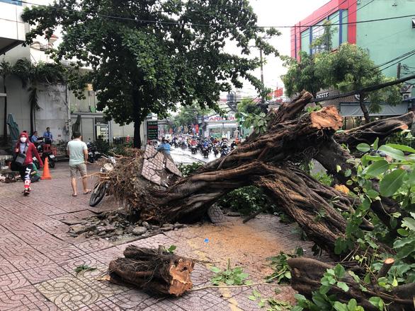 Sáng 16-4, Sài Gòn mưa lớn, nhiều cây bật gốc, tét nhánh, 1 người cấp cứu - Ảnh 2