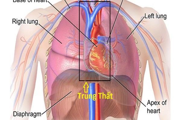 Khám bệnh để đi xuất khẩu lao động, cô gái phát hiện khối u chèn ép tim, chậm trễ sẽ nguy hiểm tính mạng - Ảnh 2