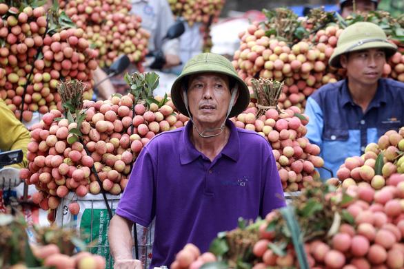 Toàn bộ thương nhân Trung Quốc phải cách ly khi sang Việt Nam mua vải thiều Lục Ngạn - Ảnh 1