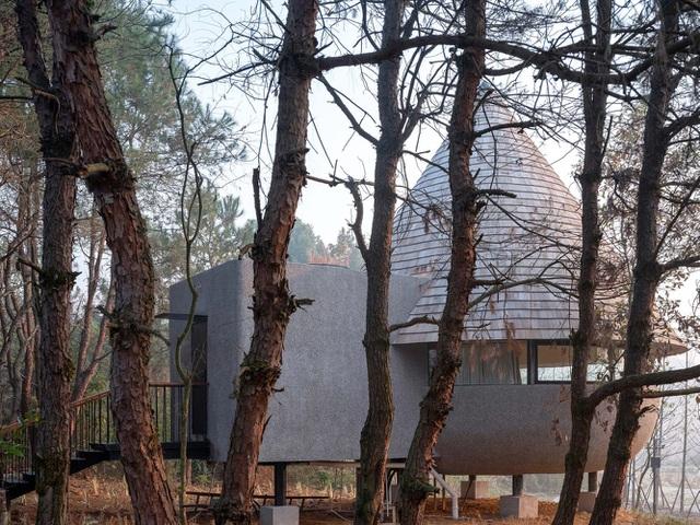 Nhà nấm giữa rừng thông thay đổi màu sắc theo độ ẩm tự nhiên - Ảnh 9