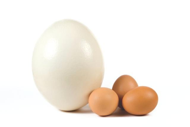 Cố ăn 100 quả trứng ngỗng để con thông minh, sau khi sinh bà mẹ trẻ thấy hối hận vô cùng - Ảnh 2