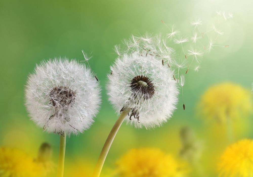 Tử vi tuần mới từ ngày 10/5 đến 16/5/2021: Bảo Bình thuận lợi gặt hái thành công, Bạch Dương nhận tin vui về tài chính - Ảnh 1