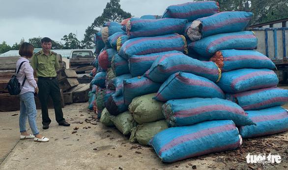 Bắt một người mua gần 3,5 tấn vỏ thông - Ảnh 1