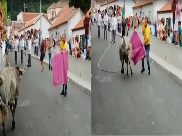 Thót tim cảnh ông bố bế con nhỏ liều lĩnh dụ bò tót hung dữ chạy về phía mình - Ảnh 1