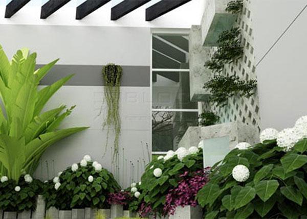 Trong ngôi nhà nên ưu tiên những cây lá to khỏe, nhiều sức sống