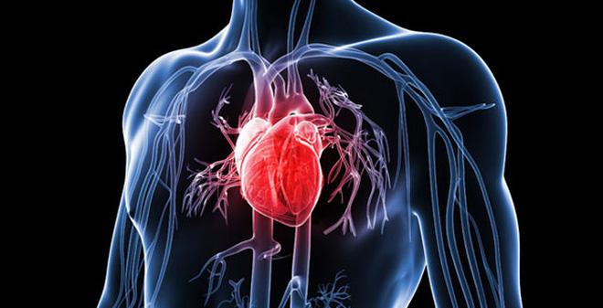 Thường xuyên uống hạt chia để hỗ trợ chống lại các bệnh tim mạch và ngăn ngừa đột quỵ hiệu quả