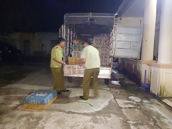 Vận chuyển 500kg gà thải từ Lộc Bình về Bắc Giang để bán kiếm lời - Ảnh 1