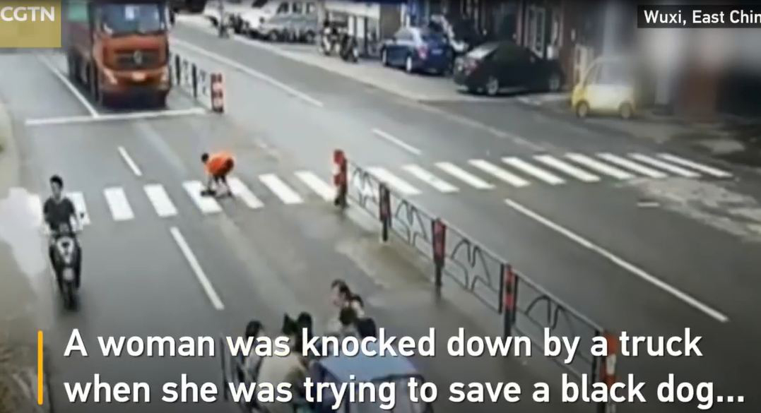 Qua đường cứu chó bị thương, người phụ nữ bị xe tải tông ngã - Ảnh 2