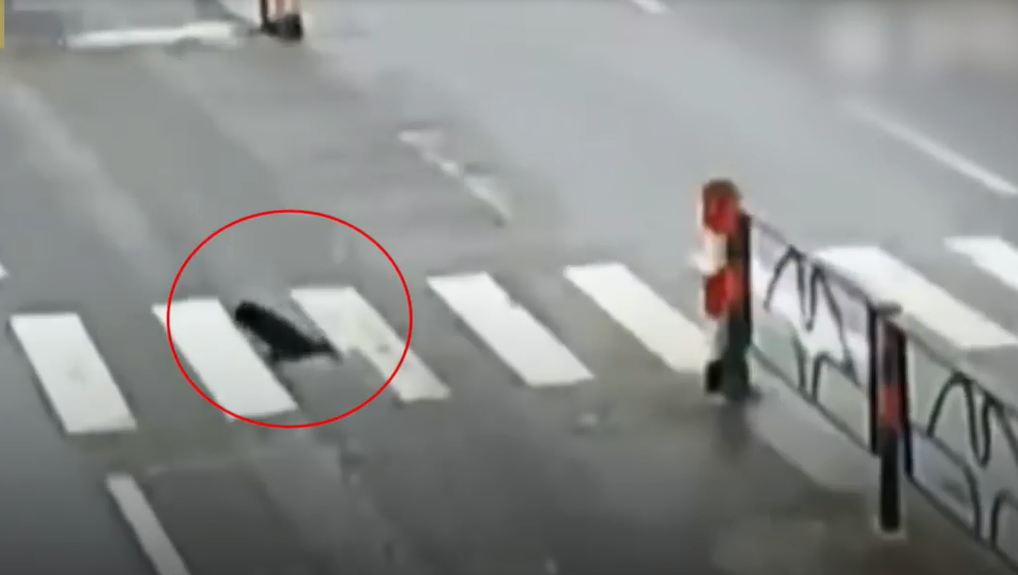 Qua đường cứu chó bị thương, người phụ nữ bị xe tải tông ngã - Ảnh 1