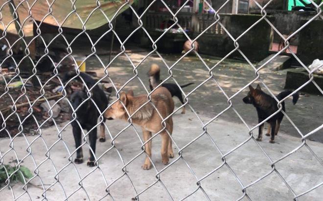 Nghệ An: Chơi trước cổng nhà, bé gái 22 tháng tuổi bị chó becgie cắn tử vong - Ảnh 4