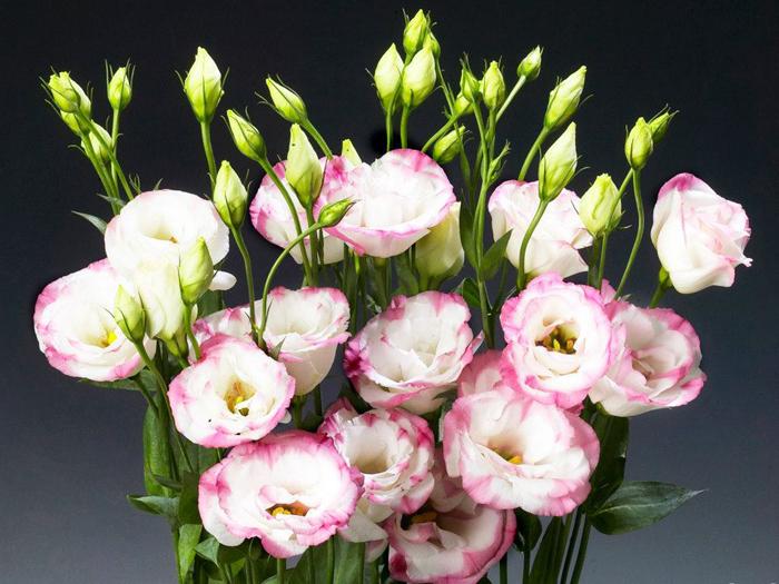 Chọn hoa tươi ý nghĩa cho ngày Gia đình Việt Nam thêm vẹn tròn - Ảnh 3