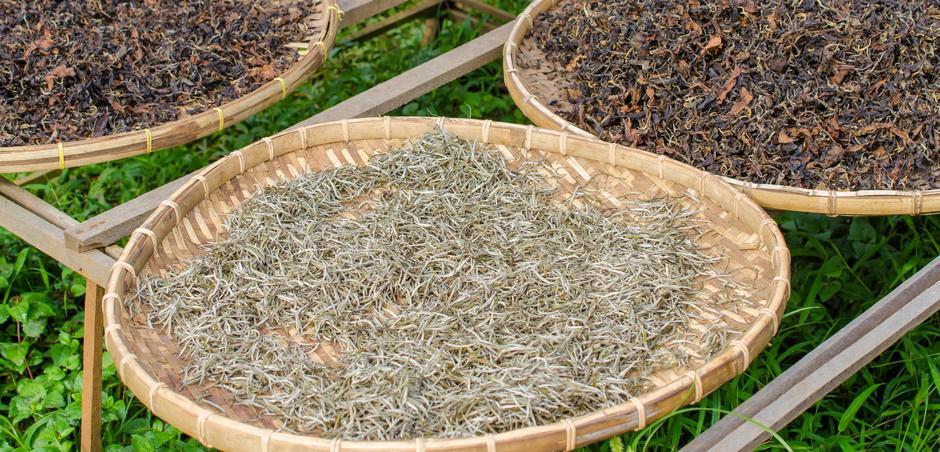 Trà trắng là trà thu hoạch khi búp non còn chưa mở