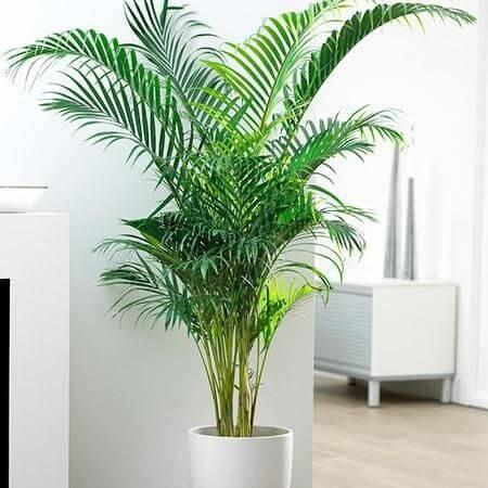 Những loại cây NASA khuyên nên trồng ngay trong nhà và đây là lý do - Ảnh 2