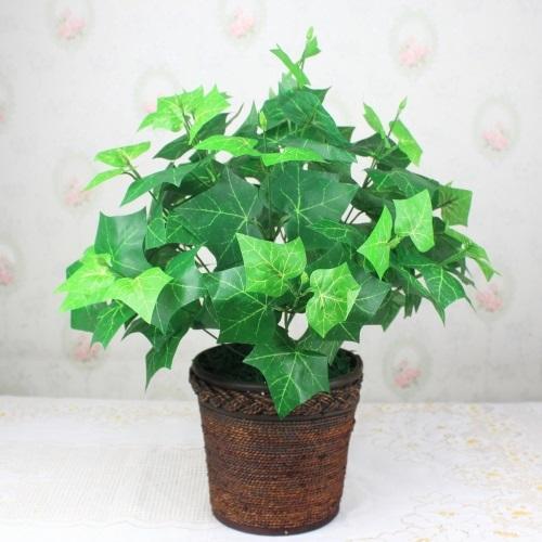 Những loại cây NASA khuyên nên trồng ngay trong nhà và đây là lý do - Ảnh 3
