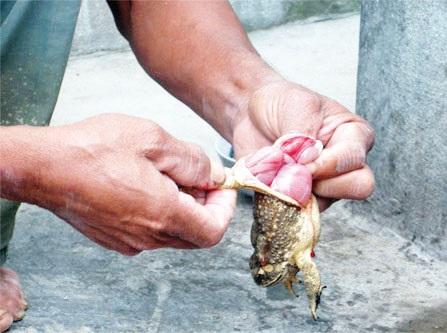 Những loại thực phẩm 'chết' cũng không được ăn vì chúng rất độc  - Ảnh 6