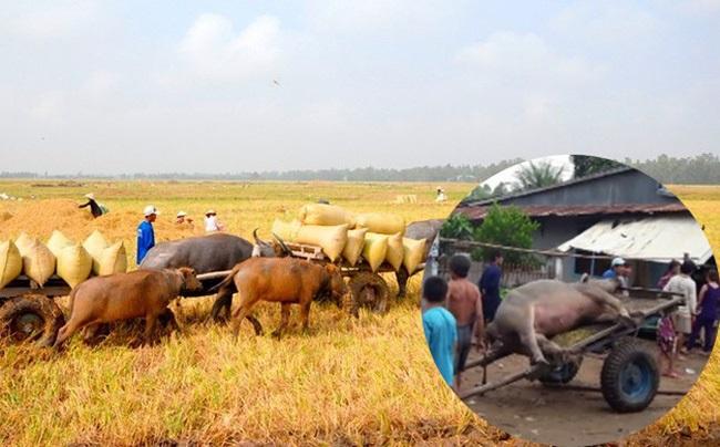 Cả người và trâu bị sét đánh chết ngoài đồng trong cơn mưa đầu mùa - Ảnh 1