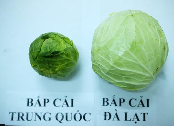 4 đặc điểm nhận biết bắp cải Trung Quốc độc hại