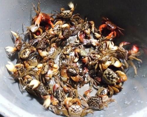 Canh cáy nấu mướp, rau đay thanh mát - Ảnh 1