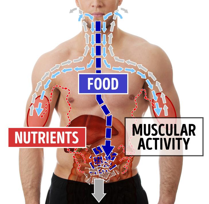 Không cần ăn kiêng, những thói quen ăn uống này sẽ giúp bạn có cân nặng lý tưởng (P1) - Ảnh 3