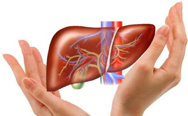 Gan là cơ quan đầu tiên thực hiện chức năng đào thải chất độc trong cơ thể