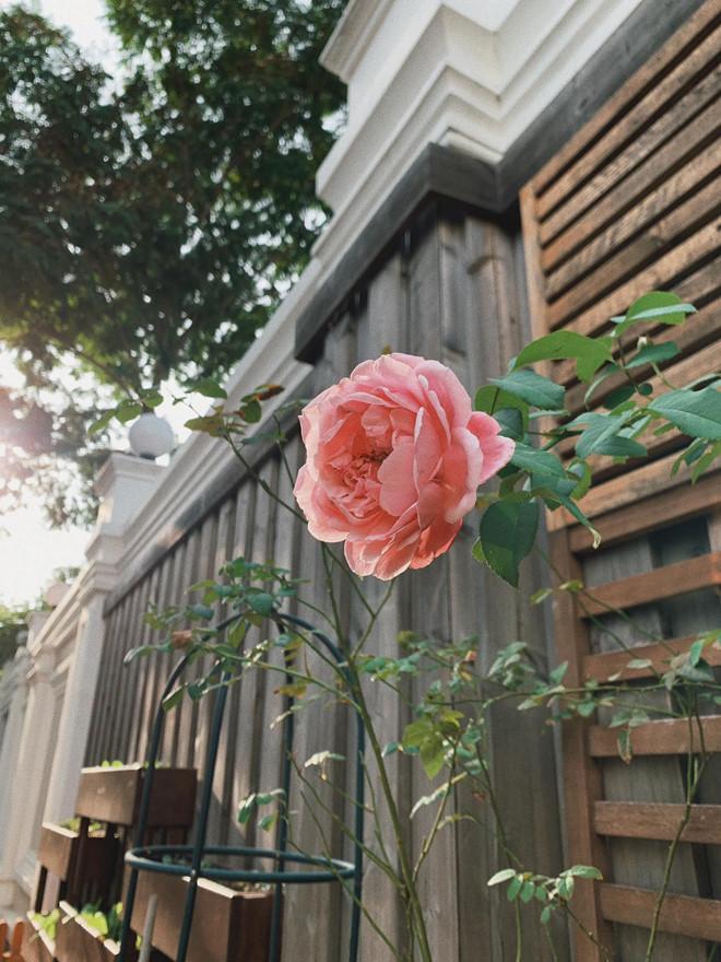 'Choáng váng' với căn biệt thự triệu đô tràn ngập sắc hoa đón Tết của Tăng Thanh Hà - Ảnh 6
