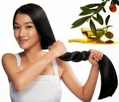 Phục hồi tóc hư tổn bằng dầu oliu hiệu quả.